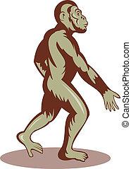 marche, préhistorique, droit, homme, ou, singe