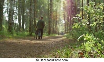 marche, sien, spring., chien, forêt, propriétaire, sentier, long, mâle