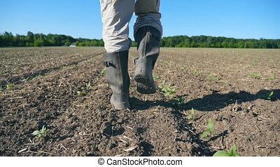 marche, sol, bottes, pieds, par, marcher, fin, pousses, lent, angle, tournesol, fermier, jeune, field., bas, vert, jambes, sec, homme, meadow., haut, mouvement, suivre, petit, mâle, vue