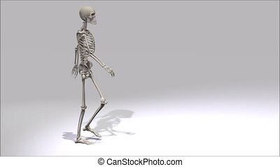 marche, squelette