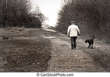 marche, vieux chien, homme