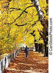 marcheur, automne, parc