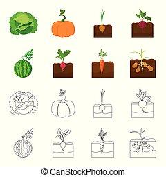 marchew, pień, ikony, styl, symbol, rysunek, web., ilustracja, szkic, komplet, arbuz, rzodkiewka, zbiór, wektor, potatoes., roślina