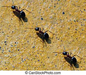 marching ants in a garden