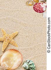 marco, colorido, conchas de mar