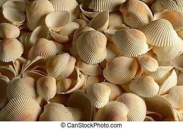marco completo, conchas marinas