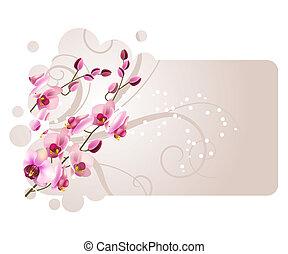 marco, con, orquídea, flor rosa