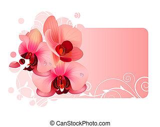 marco, florido