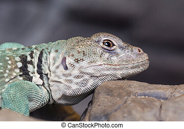 head of a lizard