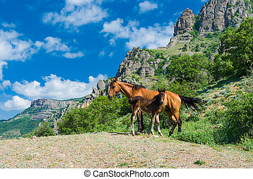 Mare and colt on a spring pasture in mountains