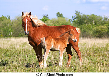 Profile of a wild mare and her colt