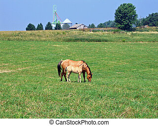 Mare and foal grazing in the pasture