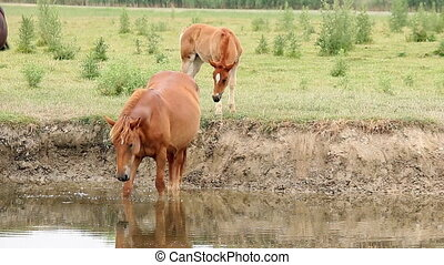 mare and foal on river