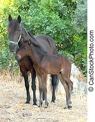 Mare and foal - A mare protecting her foal in a field in...