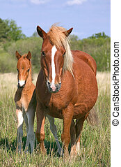 Mare and son - Wild mare and her foul in profile, focus on ...