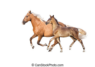Mare run with foal