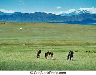 Mare with a cute foal on the pasture, Mongolian landscape