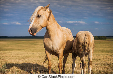 Mare with foal in the field