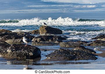 marea, gaviotas, piscina, área