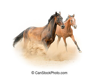 Mares New Isolated - Beautiful purebred horses running on ...