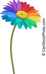margarita, arco irirs, flor, vector., fondo.