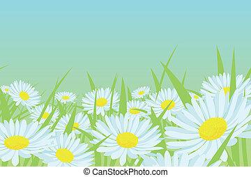 margarita, flor, campo