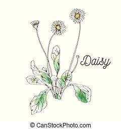 margarita, flor, pintura, blanco, plano de fondo