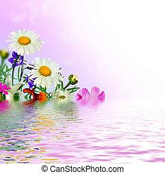 margarita, flores, campo
