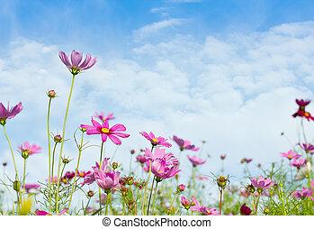 margarita, flores, con, cielo azul