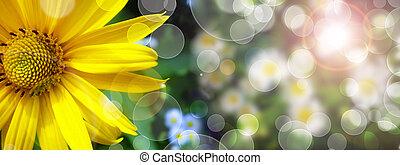 margarita, verano, bandera, hierba verde