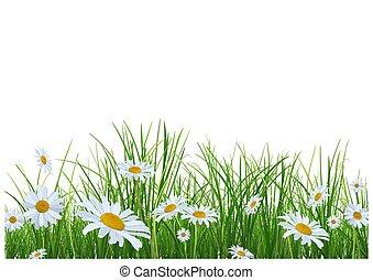 margherite, fiori, erba