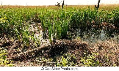 Margin of Marsh - Margin of freshwater marsh.