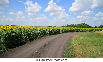 Margins of sunflower Fields with road, Russia - Margins of a...