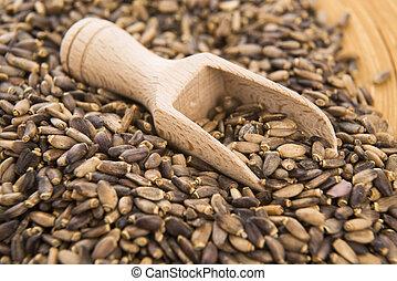 marian, lait, écossais, graines, chardon, chardon, marianum, ), (silybum