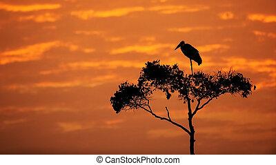 Maribou Stork on Tree With Orange Sunrise Sky