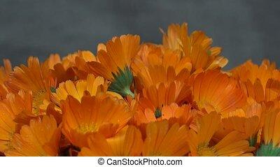 marigold calendula officinalis herb flower blooms. turntable