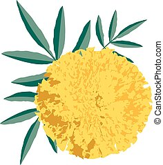 marigold - Graphic of a marigold flower
