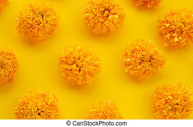 Marigold flower on yellow background.