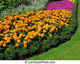 Marigold Flowerbed - Flowerbed border of marigolds in a park...