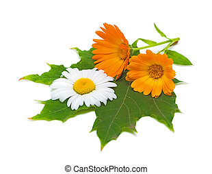 marigold flowers and daisies on a maple leaf