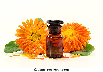 Calendula tincture and fresh flowers on a white background