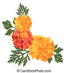 marigolds on white - Decorative background with orange ...