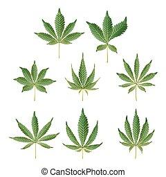 marihuana, grünes blatt, vector., medizinische kräuter, collection., cannabis, sativa, oder, cannabis, indica, abbildung, freigestellt, weiß, hintergrund., graphischer entwurf, element, für, printables, web, drucke, t-shirt.