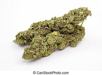 marijuana, brote, aislado, blanco