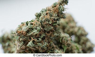 marijuana, brotes, blanco, fondo., cicatrizarse, de, un, marijuana, flor