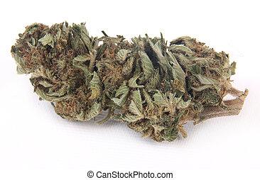 marijuana, broto