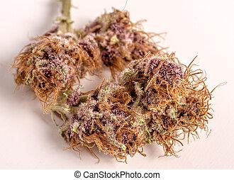 Close up of medicinal marijuana buds oh white background