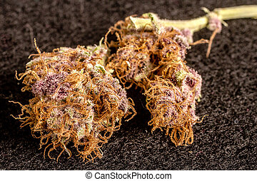 Marijuana Buds - Close up of medicinal marijuana buds on ...