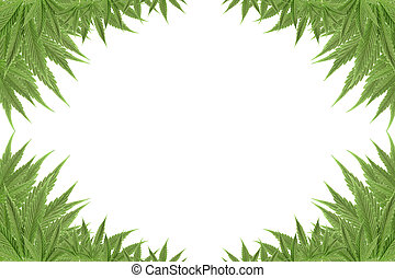marijuana cannabis background green textures