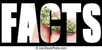 marijuana, faits
